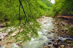 Wildnistrail Buchensteig im Reichraminger Hintergebirge, Nationalpark Kalkalpen