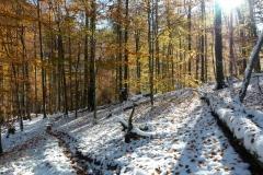 Früher Wintereinbruch im Nationalpark Kalkalpen