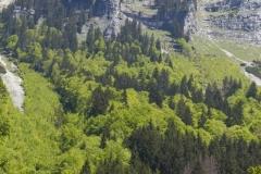 Wildnisgebiet Dürrenstein